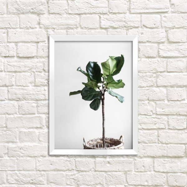"Poster ""Ficus"""