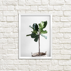 Poster - Ficus